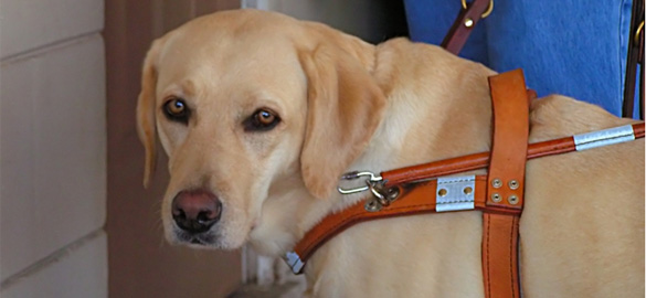 How animals lend a helping paw to people with disabilities
